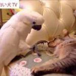 犬!猫!動物!おもしろ爆笑ハプニング!6秒動画!パート4