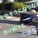 【保護犬 感動】危険と隣り合わせの救助!道路の真ん中を駆けていく犬を保護できるのか!?A small dog almost hit by a car many times got saved