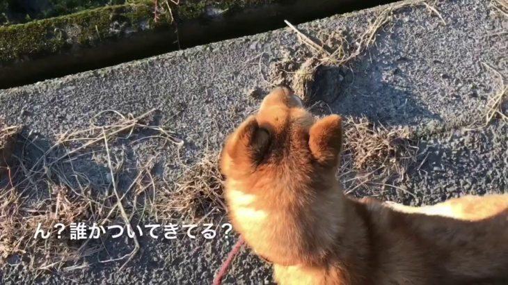 犬には見える霊に気づく犬 A dog noticing a ghost
