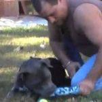 08 04AW1785ピットブルラブ:忠実な犬達の命を救う
