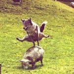 【おもしろ・かわいい!犬動画】思わずくすっと笑う犬動画集 Part②【柴犬癒しch】 <Funny dog compilation>