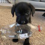 「面白い動物」最高におもしろい動物・犬, 猫のハプニング, 失敗動画集