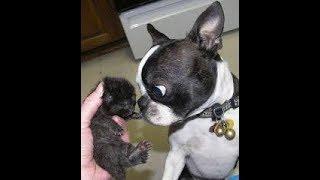 2019「絶対笑う」最高におもしろ犬,猫,動物のハプニング, 失敗画像集#383