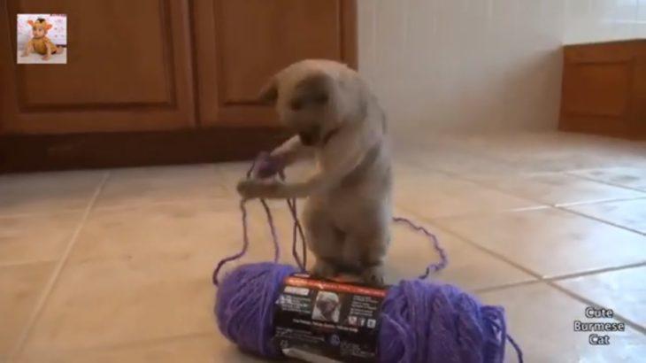 最高におもしろ猫のハプニング, 失敗集・この動画を見て笑わない人がいないだろう