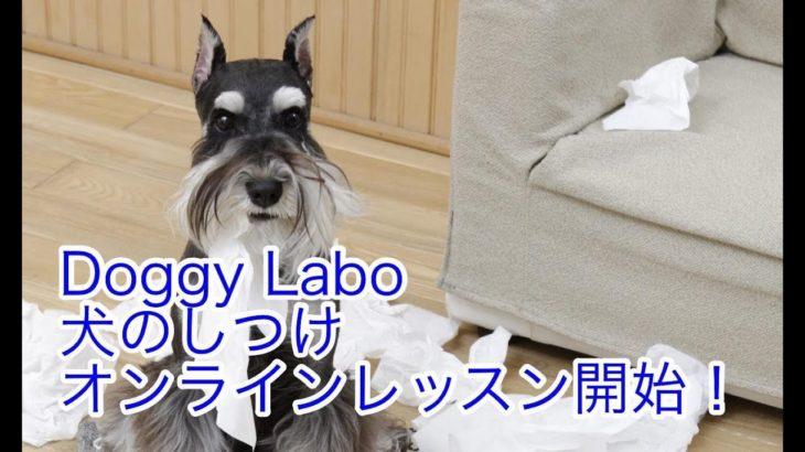 Doggy Labo 犬のしつけ オンラインレッスン
