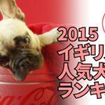[ペット情報通#3]2015イギリスの人気犬種ランキング –  胸キュン!!
