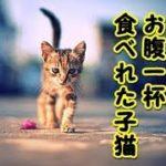 感動 泣ける話 野良猫餓死・生まれて初めてお腹一杯 ご飯食べれて良かったね(泣)(猫 感動 泣ける話 保護 涙腺崩壊 感涙 動物 動画 里親)招き猫ちゃんねる