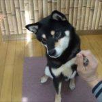 おもしろ犬 ~新年明けましておめでとうの巻~
