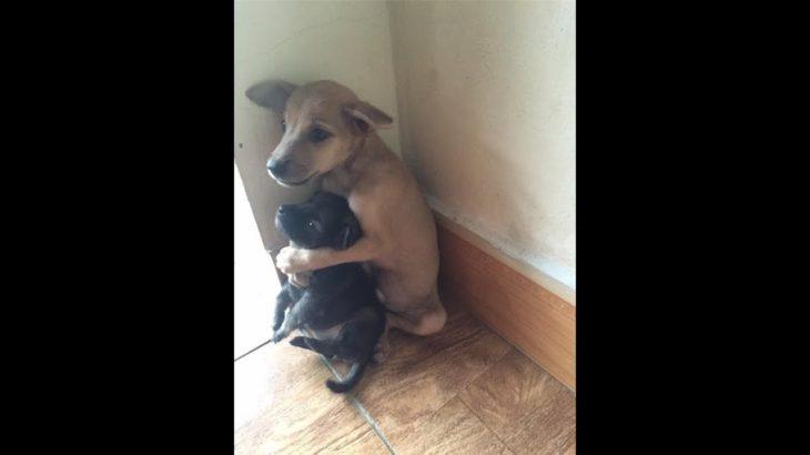 2019「絶対笑う」最高におもしろ犬,猫,動物のハプニング, 失敗画像集 #43
