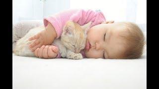 【ニヤニヤ注意】超癒される!猫と赤ちゃんの可愛い仲良し動画#1