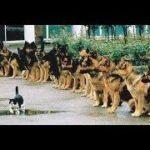 「面白い動物」あり得ないことをする犬, 猫・おもしろ犬, 猫のハプニング, 失敗集 #432