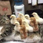 「面白い動物」あり得ないことをする犬, 猫・おもしろ犬, 猫のハプニング, 失敗集 #419