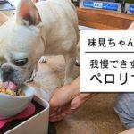 ご飯を待ちきれない犬がカワイイよぉ