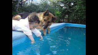 2019 犬や猫と遊ぶかわいい赤ちゃん – おかしい赤ちゃんコンピレーション#334
