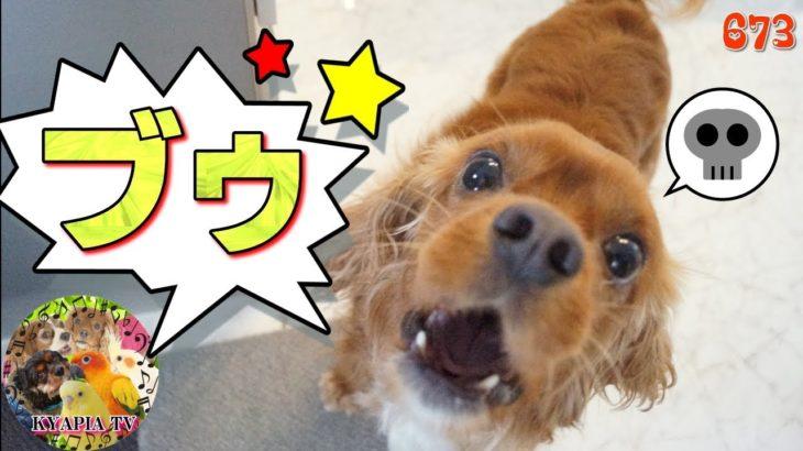 おならの音に気づかない犬!反応なし!673|おもしろい・かわいい動物ペットFunny dog fart animal