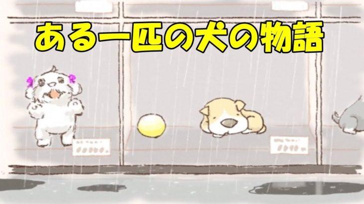 【感動する話 アニメ】ペットショップで寂しそうにしている「ある一匹の犬の物語」chinta ch