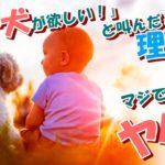 【泣ける/感動】子犬と障害ある少年のトキメキ劇的ストーリー【ネットで話題沸騰!】