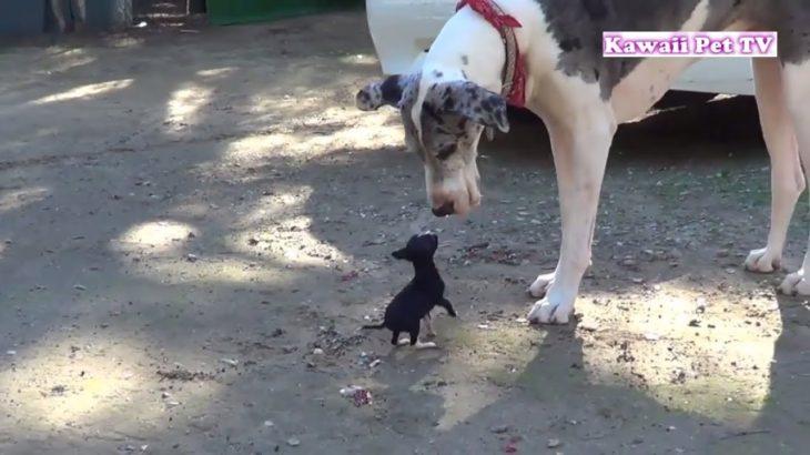 初めて新入り子犬に会った犬の反応が超かわいい・めっちゃ嬉しそう