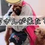 アピールの仕方がこんなにも違う!! トイプードルのTaruto&Rasuku
