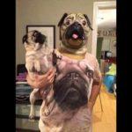 「面白い動物」あり得ないことをする犬, 猫・おもしろ犬, 猫のハプニング, 失敗集 #424