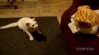 ショートドッキリ!猫や犬を驚かす動画を集めましたpart1