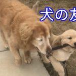 緑内障の手術を受け目が見えなくなってしまった老犬。元気を与えてくれたのは一匹の子犬でした【感動】