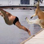 「面白い動物」あり得ないことをする犬, 猫・おもしろ犬, 猫のハプニング, 失敗集 #449
