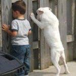 「絶対笑う2019」最高におもしろ犬,猫,動物のハプニング, 失敗画像集 #67