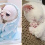 「かわいい瞬間」面白い動物, 猫のハプニング, 失敗動画集・かわいい犬, かわいい猫 #1