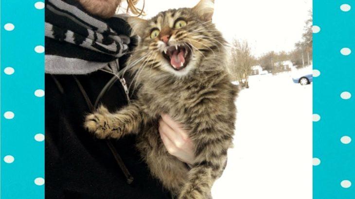 家で面白いびっくり猫 || 面白い赤ちゃんとペット