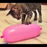 2019【面白い動画】 かわいい猫 – かわいい犬 – 最も面白いペットの動画 #1