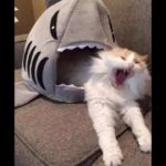 はい、どうぞ!!笑ったら寝ろ!最高におもしろい犬,猫のハプニング, 失敗動画集