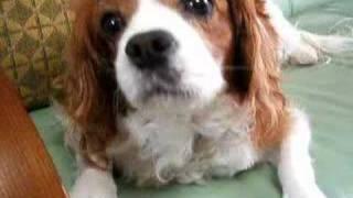 犬の動画その1