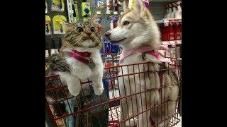 犬と一緒に育った猫が犬すぎるww自分を犬と勘違いw