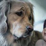 【犬と赤ちゃん仲良し】最高におもしろい赤ちゃんと犬のハプニング・赤ちゃんと犬絶妙な関係 #2