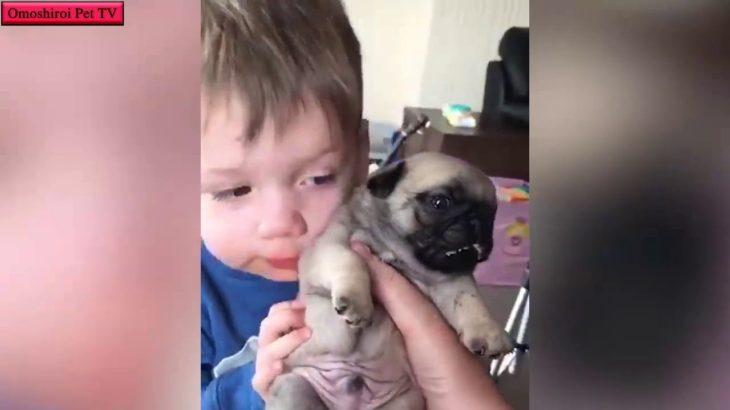 死ぬほどかわいい子犬たち・最高におもしろ犬のハプニング