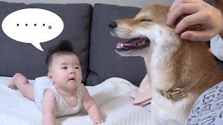 ママに甘える柴犬を不思議そうに眺める4ヶ月の娘