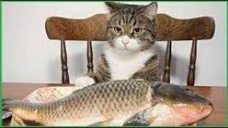 「面白い動物」あり得ないことをする犬, 猫・おもしろ犬, 猫のハプニング, 失敗集 #466