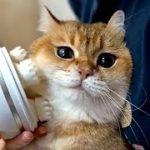 たまらん~「可愛い動物に爆笑」猫・犬・動物の面白ハプニング・失敗集!癒されて面白い~#48 Funny Cats and Dogs Awesome Funny Pet