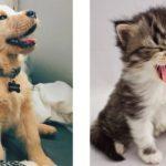 「かわいい瞬間」面白い動物, 猫のハプニング, 失敗動画集・かわいい犬, かわいい猫 #5