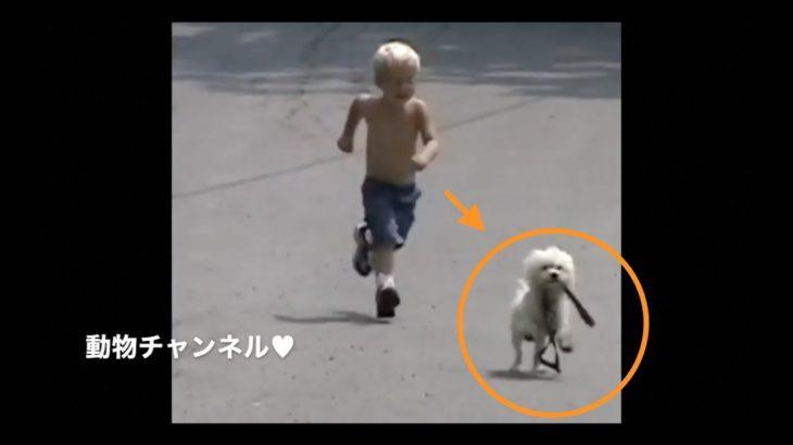 絶対に笑ってはいけないペット動画/イヌ、ネコの癒しハプニングまとめ#3