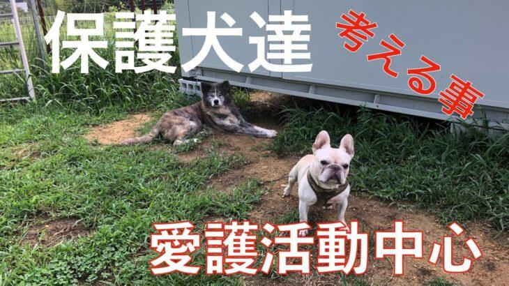 保護犬達と生きて行く!Animal Rescue Nursing