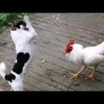 「面白い動物」あり得ないことをする犬, 猫・おもしろ犬, 猫のハプニング, 失敗集 #436