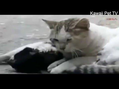 泣けるほど感動した●人間を感動させた犬、猫の動画●涙が止まらない