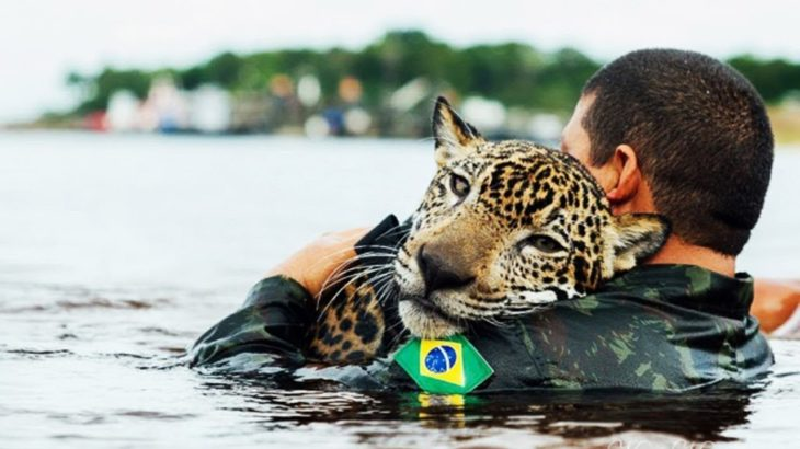 【泣ける感動, 尊敬】危険を顧みず , 動物の命を救ったヒーローの人たち