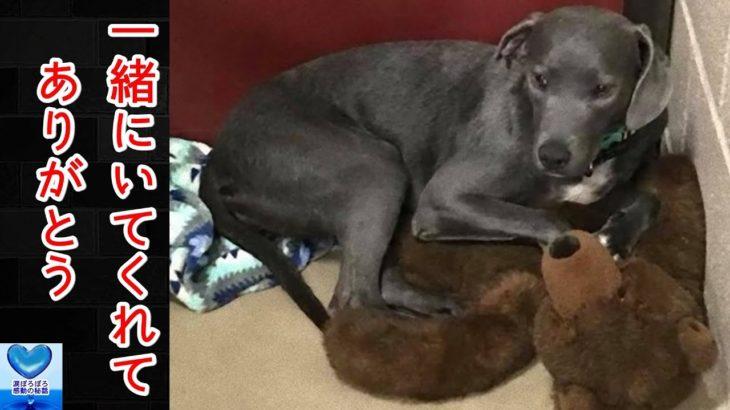 家族に捨てられてしまった犬。唯一の救いは大好きなぬいぐるみが一緒だったこと【感動】