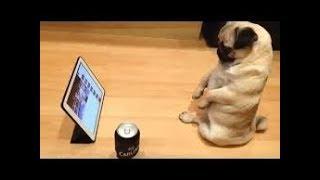 「絶対笑う」最高におもしろ犬,猫,動物のハプニング, 失敗画像集 #497