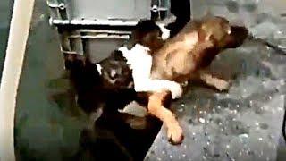 溺れるネコを救助するイヌの姿に涙が止まらない!猫・犬・動物の面白ハプニング!癒しの動物動画#98 Funny Cats and Dogs Awesome Funny Pet