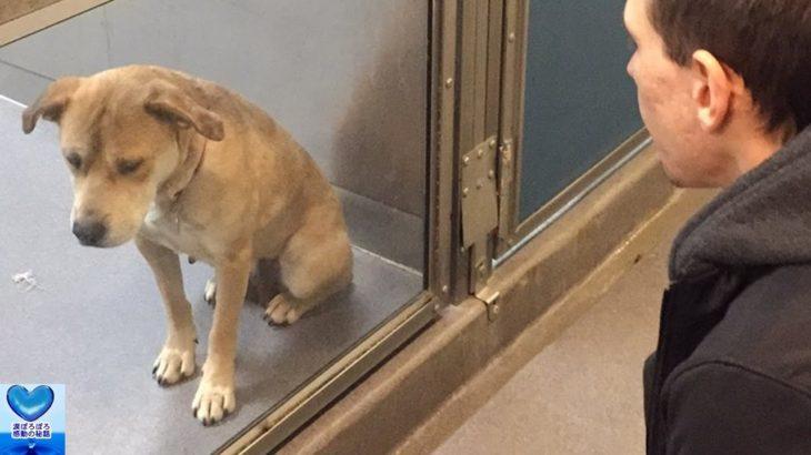 孤独と不安に耐えていた保護犬との出会いが人生を変えた!その後の変化に涙が溢れる【感動】